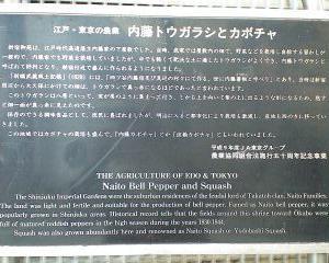 【追記あり】東京の神社と野菜。
