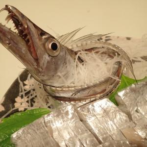 釣ったタチウオは美味しく姿造りで頂きました