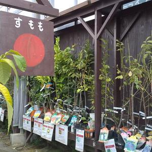 果樹・花木苗セール♪多肉植物フェア♪のお知らせ の巻