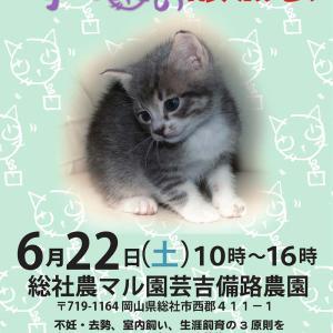 子猫の譲渡会 の巻