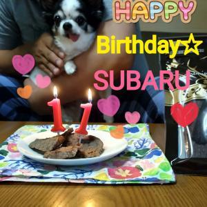 今日はスバルの11歳のお誕生日です