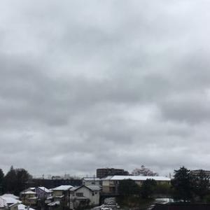 予報とは違って 雪は積もらなかった。。