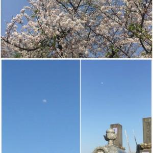 ある時から・・桜の季節は哀しみの記憶に。。