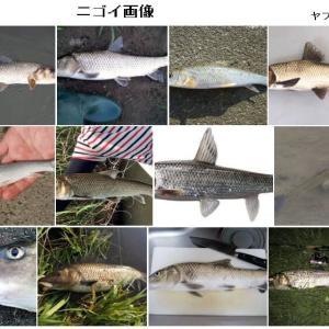この時期、愛知県の渓流は無料釣り場