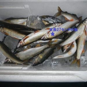 今日の鮎はほとんどが大きかった。愛知県の一級河川