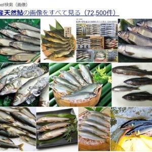 今、矢作川水系にいる2種類の天然海産鮎
