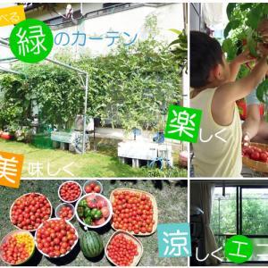 水耕栽培で美味しいグリーンカーテンを育てよう!ミニトマトやスイカetc