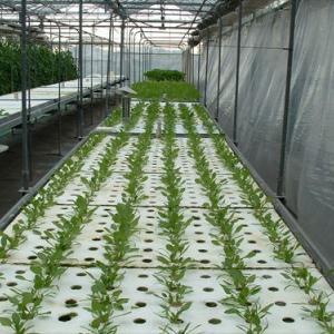 水耕栽培にする理由【水耕栽培で農業をはじめる 亀ファームの就農日記NO.3】