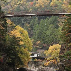 天川村 みたらい渓谷 紅葉 1