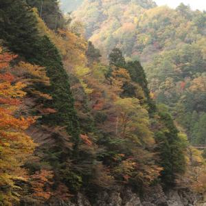 天川村 みたらい渓谷 紅葉 2