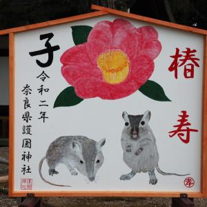奈良市 護国神社 椿