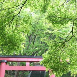 桜井市 談山神社 新緑 ツツジ
