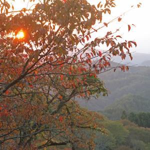 吉野山 上千本 夕日