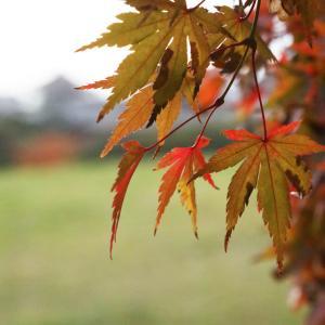 大阪 太子町 和みの広場 紅葉