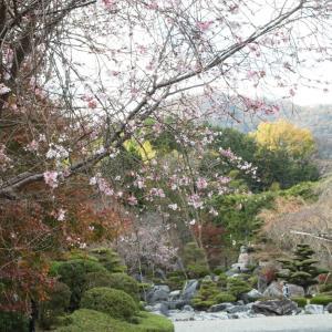 葛城市 当麻寺 奥院 十月桜