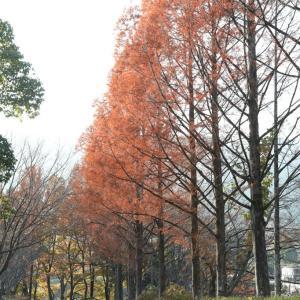 葛城市 かつらぎの森 紅葉