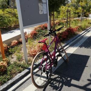 少しずつ自転車の整備でもまだまだかな~
