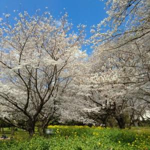 春・・・遅い目覚めです(^o^;