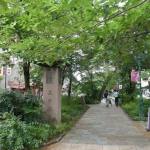 大劇場へ向かうそこにハートの紫陽花が有りました☆花の道☆兵庫県宝塚市♪