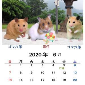 6月のカレンダーできました