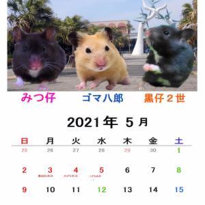 5月のカレンダー2種類で〜す