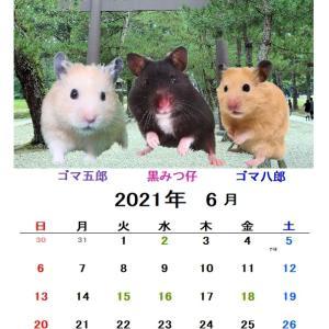 6月のカレンダー 二種類つくりました