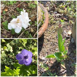 春ですねー