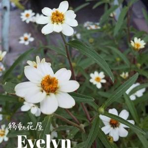 移動花屋Evelyn