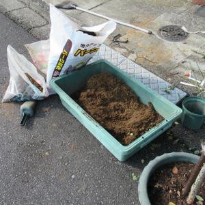 オリジナル用土で植え替え始める