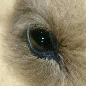 犬の目の試作