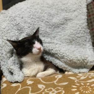 丸尾白黒猫ジュリアン(日直:飼い主)
