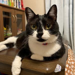 監視台の猫達(日直:飼い主)