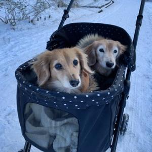 初散歩・雪だぁーい♪