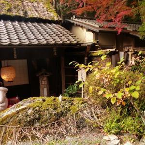 京都にモミジ狩り3 鮎茶屋 平野屋 つたや
