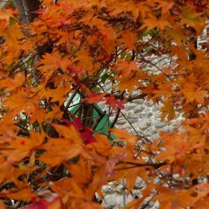 京都にモミジ狩り4 愛宕街道  手打ちうどん さが美