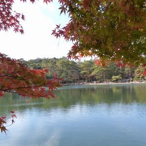 新神戸駅から森林植物園3 修法が原池 コゲラ 紅葉