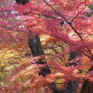 新神戸駅から森林植物園4 ニホンカモシカ