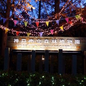 新神戸駅から森林植物園 ハイキング5 ライトアップ 紅葉