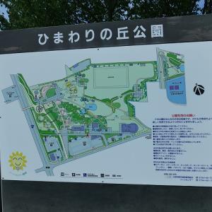 ヒマワリを見に行きました。 小野市 ひまわりの丘公園