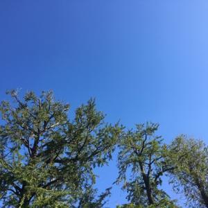 青空を見上げて 様々なことを思い巡らした昨日