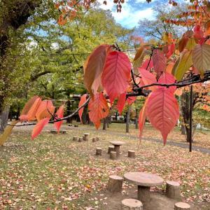 札幌の紅葉に癒されて(2)