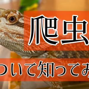 【理科】爬虫類ってなんだ。フトアゴヒゲトカゲの生態。小学校受験