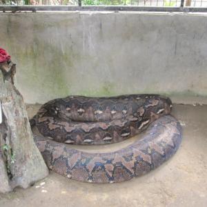 蛇は何処へ?