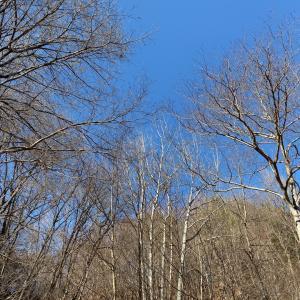 正月キャンプ in Foresters Village Kobitto その2