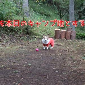 10月11日~12日 1+1ぴきおキャンプ in 富士山の近く