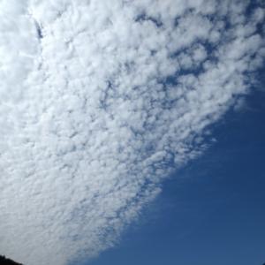 ■鱗雲飛ぶ空