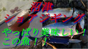 沼津ショアジギパート2夜タコ料理編