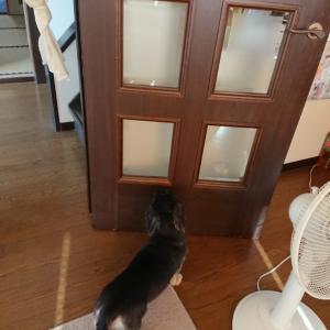 開いてるドアをカキカキしちゃったの