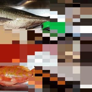 2020/8/6 外房 御宿岩和田 明広丸 沖の根魚五目