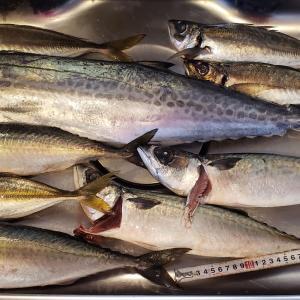 【ネット通販】漁師直送 昭和丸 特選鮮魚上級セット